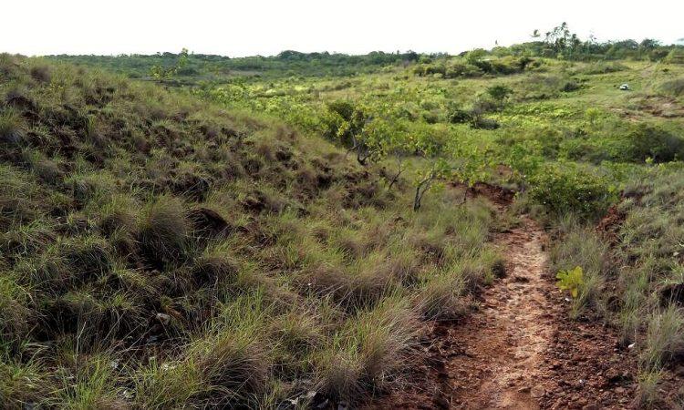 Camino Publico de la Finca de 8thLife project Panama